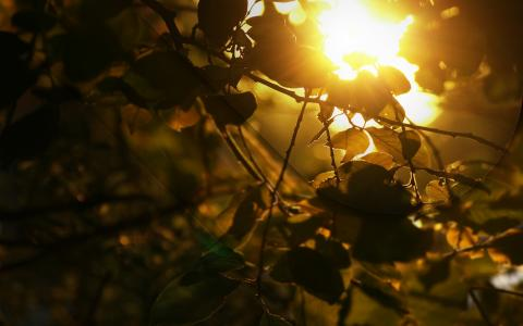 阳光透过树叶
