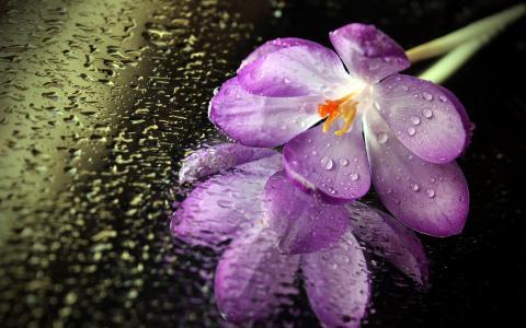 在湿镜子上的花