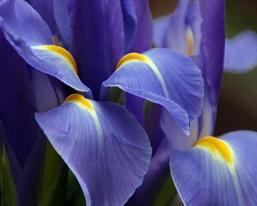 宏伟的紫色花朵