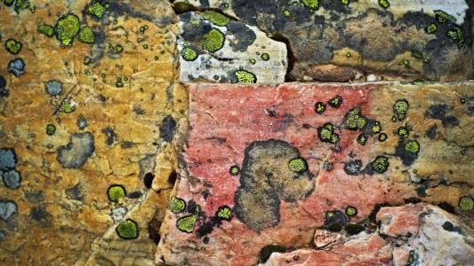 在岩石上的模具
