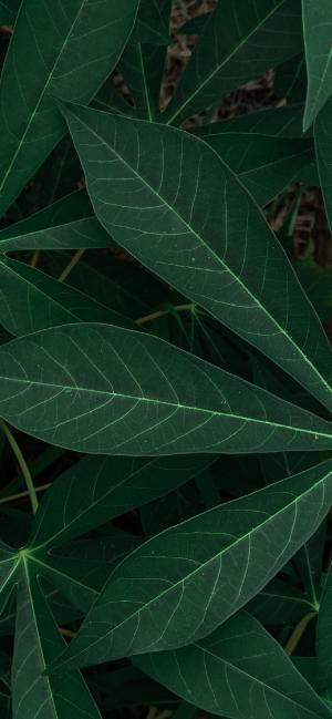 清新绿叶摄影