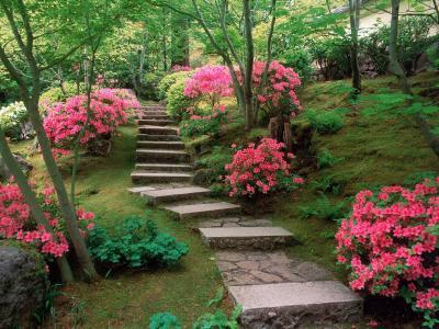 日本花园里的杜鹃花