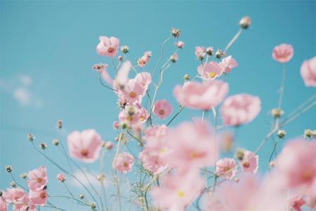 美丽鲜艳的粉色花朵