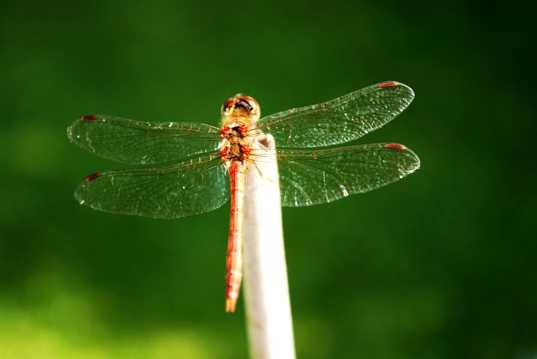 美丽的蜻蜓