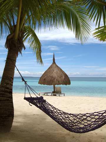 海滨海滩椰子树