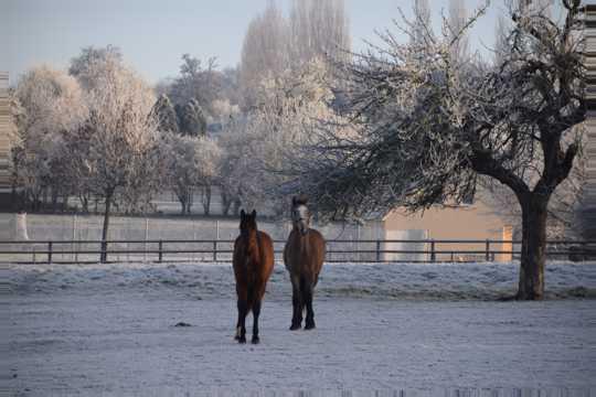 冬日的马场马匹