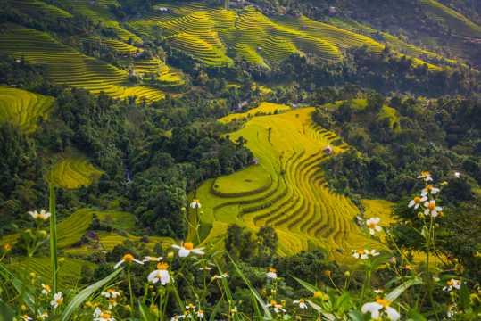 亚洲水稻梯田景观