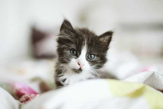 乖巧卖萌小奶猫
