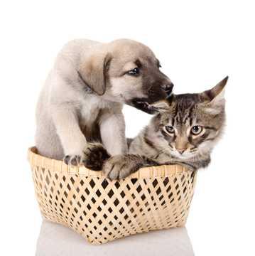 可爱的汪星人与猫猫
