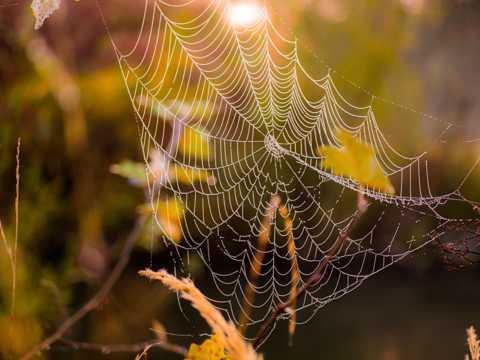 晨光下的蜘蛛网