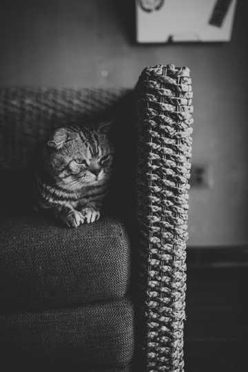 乖巧的萌宠猫