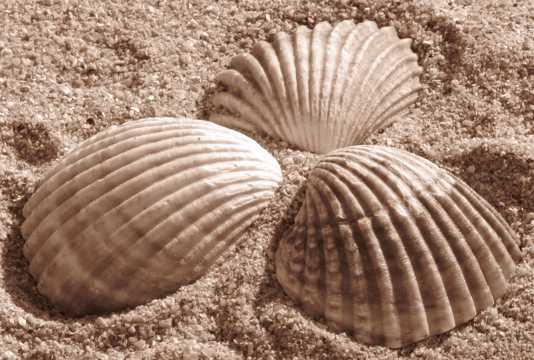 美丽的沙滩海贝壳