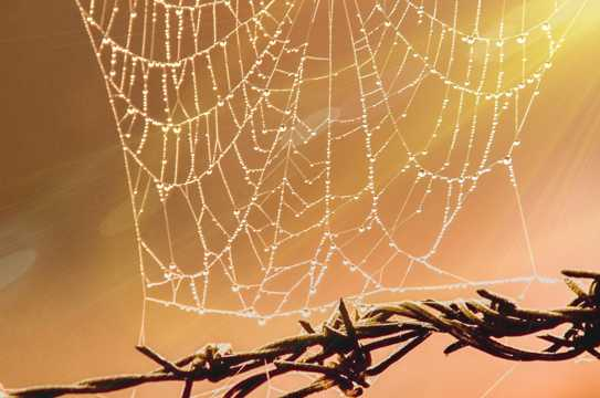 沾满露水的蜘蛛网